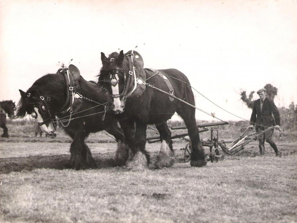Grampa-ploughing-001-1024x770